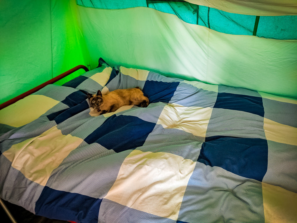 cat on the double bed of a eurocamp classic tent