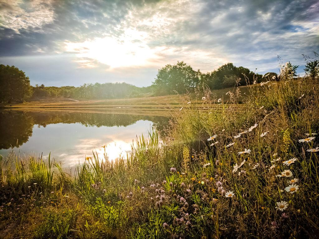 fishing pond and pretty flowers at saint avit loisirs