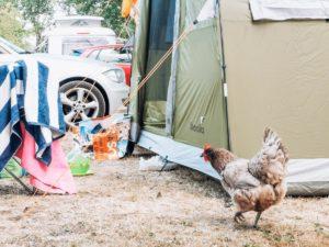 hens at camping de civray-07