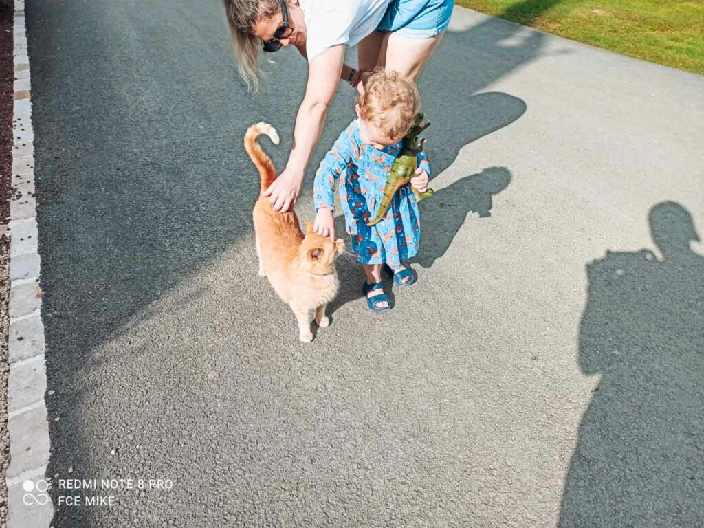 A ginger cat being stroked by the toddler at camping la roche posay