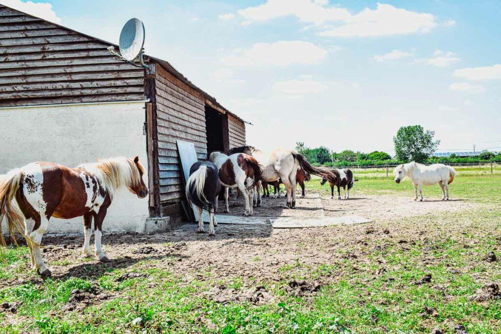 horses-at-the-domaine-de-la-breche-poney-club