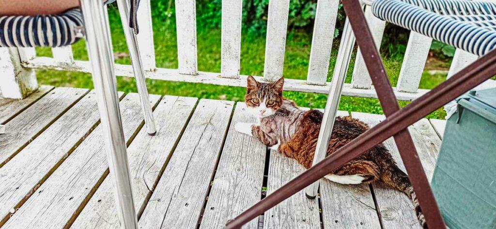 our-cat-at-our-accommodation-on-domaine-de-la-breche-campsite