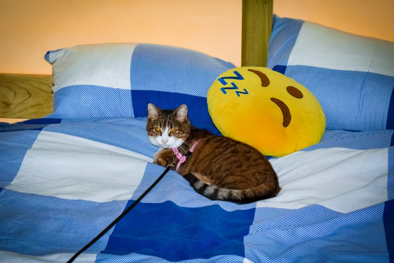 KitCat and Mr Snooze the waking up emoji